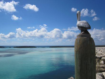 Castaway Cay #3