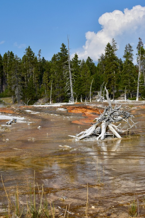 Yellowstone National Park - 9